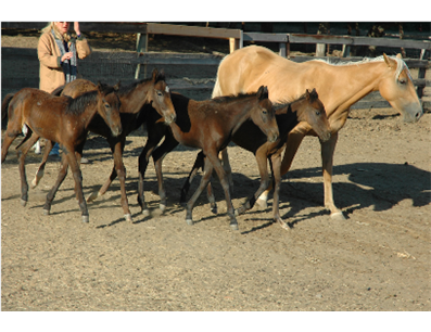 history of non profit horse rescue essay Contact us 2114 sound avenue po box 759 baiting hollow, ny 11933 (631) 574-9667 info@bhfhorserescueorg find us on the map.